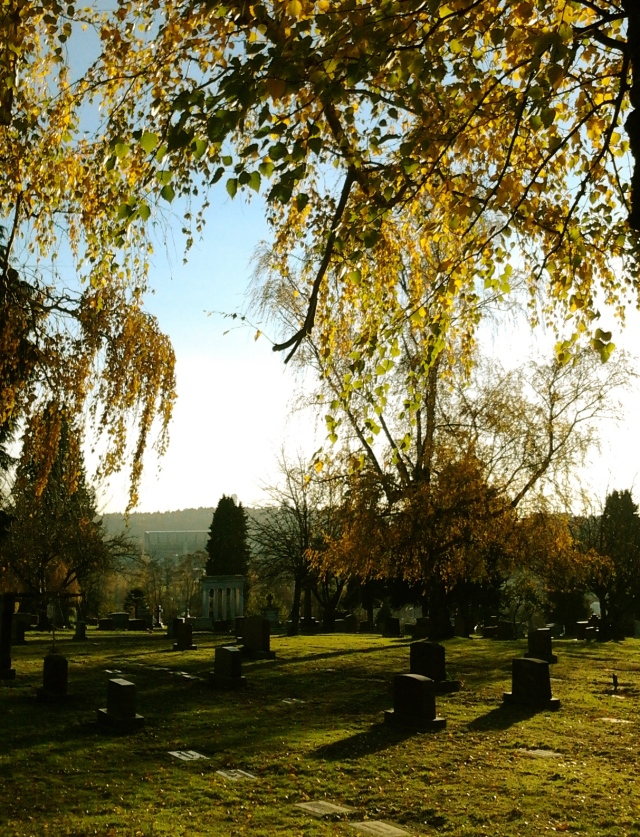 11.21.2015 cemetery gold trees