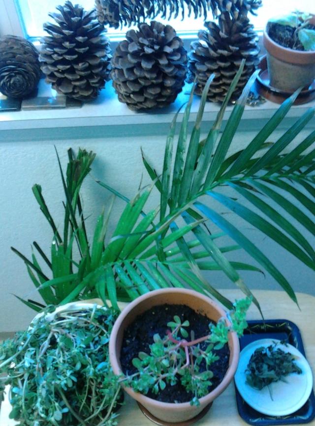plants 8.19.13