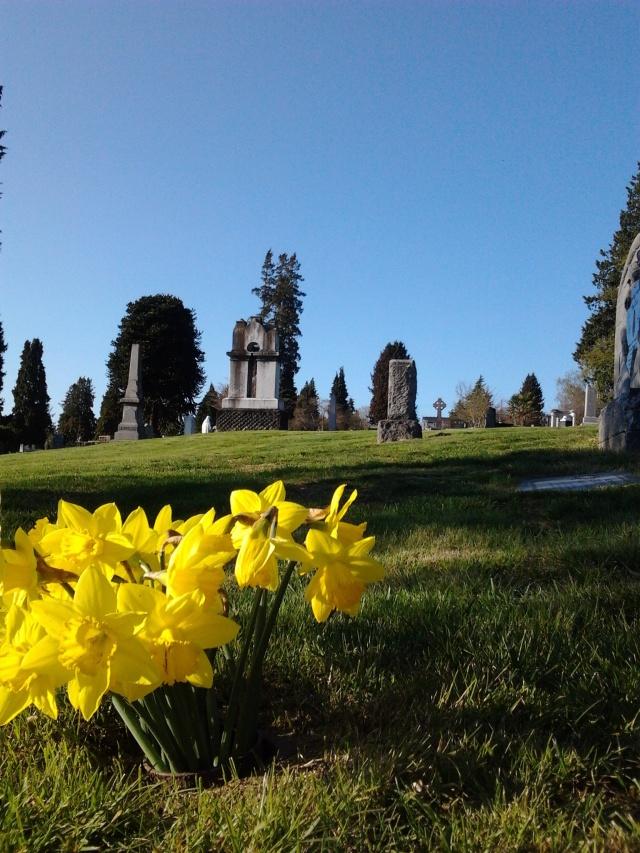 Calvary daffodils