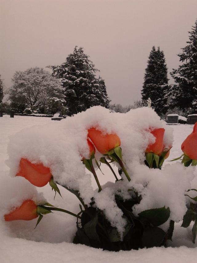 12.25.17 salmon roses