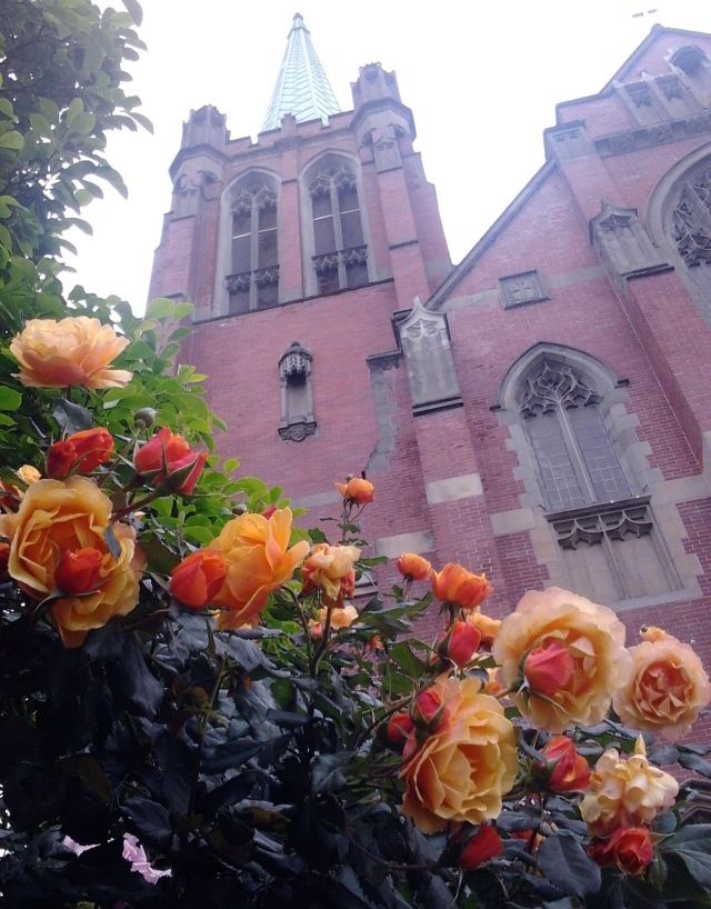 Blessed Sacrament roses 6.10.14
