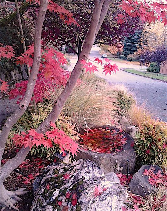 Foliage 10.28.18