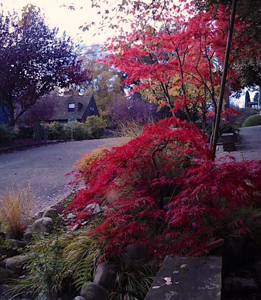 Foliage 2 10.28.18