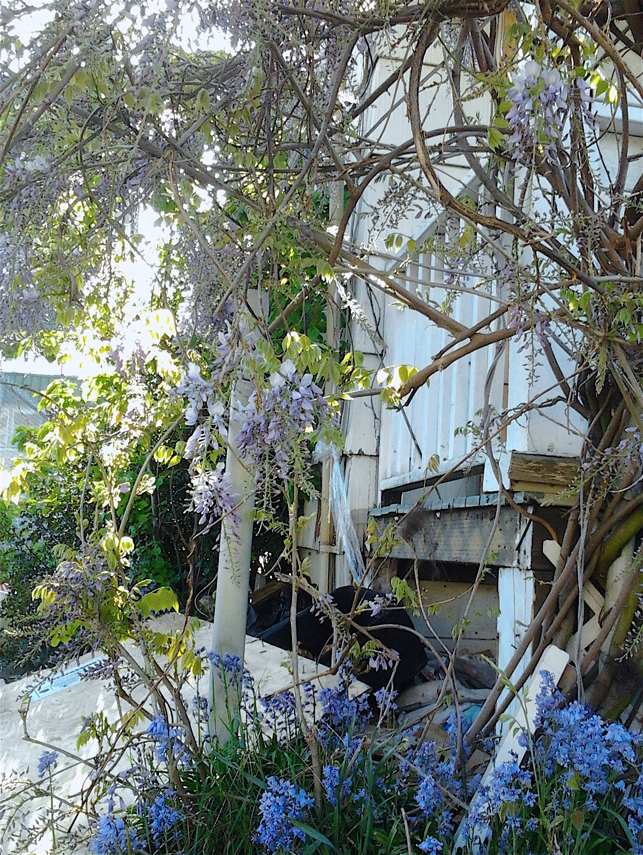 This image has an empty alt attribute; its file name is wisteria-house-45th-st-behind-tj-5.1.2018-1.jpg
