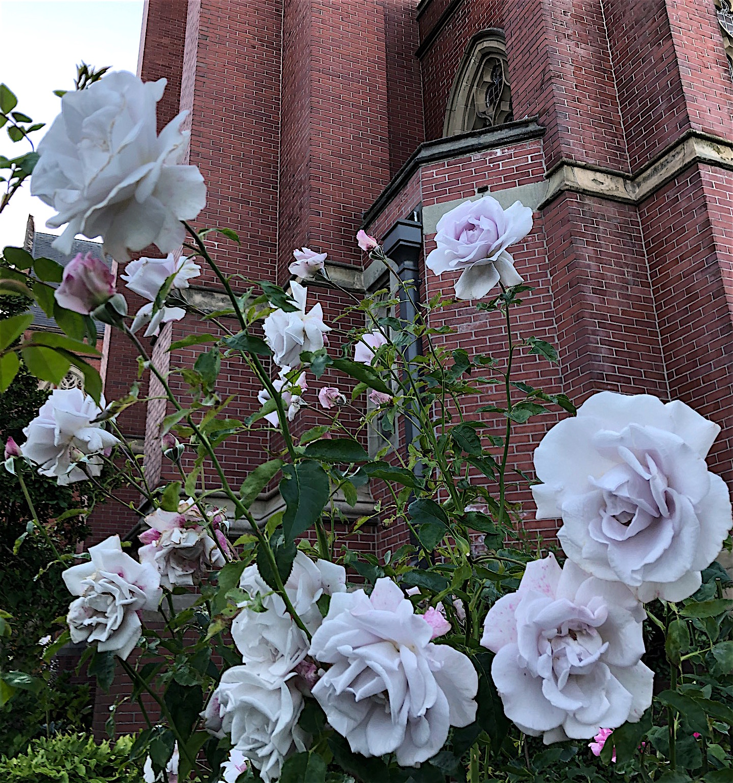 Silver Roses Church 8.31.20